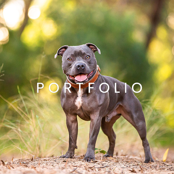 Allira Fontana Photography portfolio